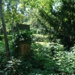 Baumbestattung mit und ohne Trauerfeier in Berlin Brandenburg